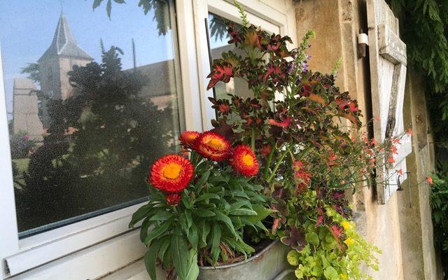 Fleurs et église à Amance